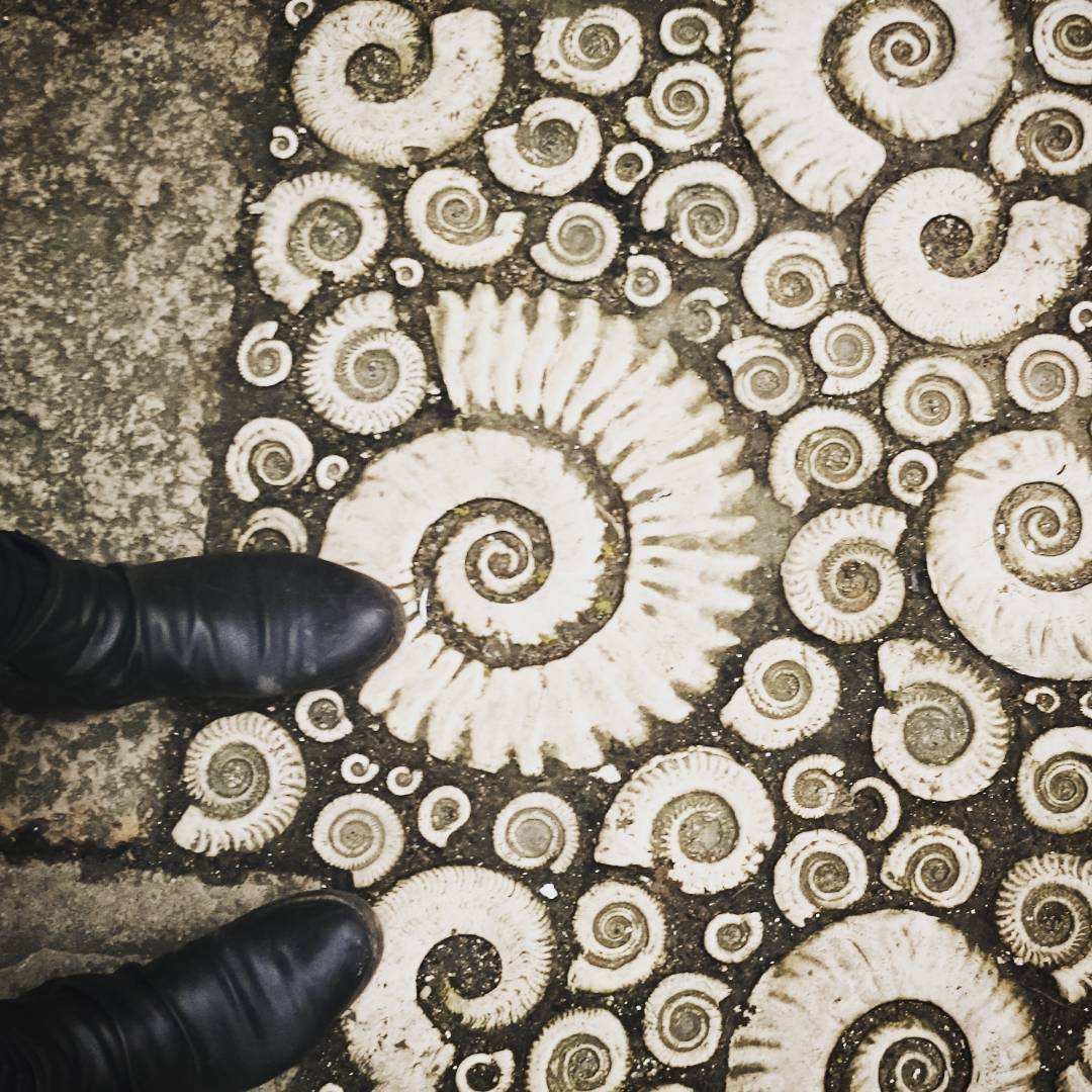 stone_pavement_ammonite